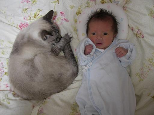 赤ちゃんをぽっちゃり猫が保護する心温まる動画です!