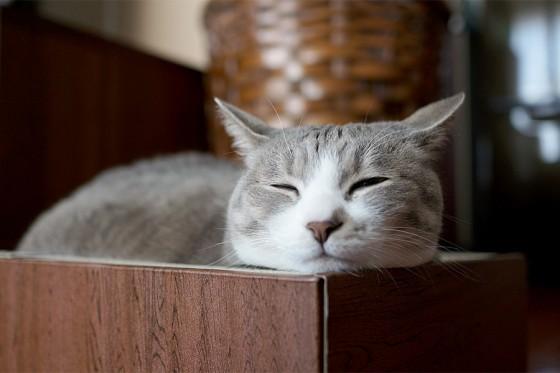 【超可愛い】魔法使いと黒猫のウィズCMの黒猫の正体はモアレ?