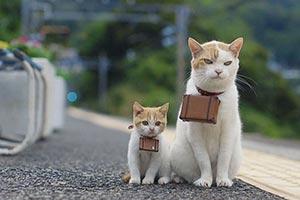 【話題人気猫CM】じゃらん猫、Y!mobile猫、エプソン猫癒され動画比べてみました!