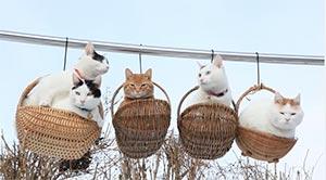 今日は、まったり癒されたーいという人向けの かご猫、のせ猫を紹介したいと思います。 まったくの落ちなしですが、 見ているだけで ほんわかしてきます。