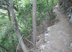 奇跡の生還!山から転落した幼女が遭難しなかった驚きの理由とは?